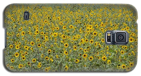 Huge Wild Sunflower Colony Galaxy S5 Case