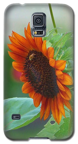 Galaxy S5 Case featuring the photograph Humility Of A Sunflower by Jeanette Oberholtzer