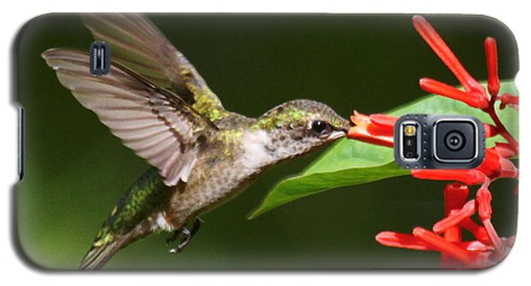 Galaxy S5 Case featuring the photograph Hummer At The Firebush by Myrna Bradshaw