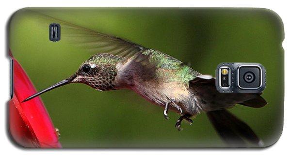 Look Hummingbird Eyelashes Galaxy S5 Case