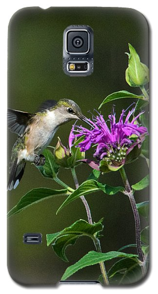 Hummer On Bee Balm Galaxy S5 Case
