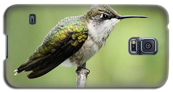Hummingbird 3 Galaxy S5 Case by Bonfire Photography