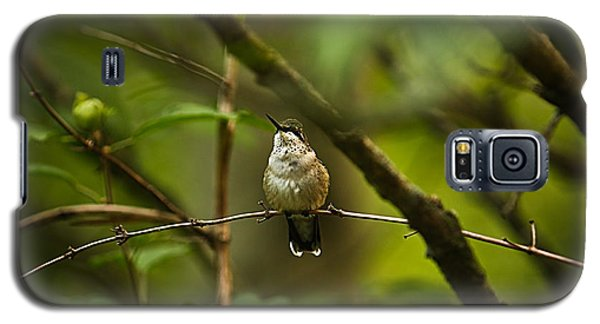 Galaxy S5 Case featuring the photograph Hummingbird 3 by Tammy Schneider