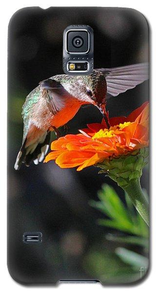 Hummingbird And Zinnia Galaxy S5 Case by Steve Augustin
