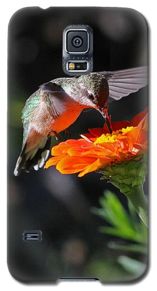 Hummingbird And Zinnia Galaxy S5 Case