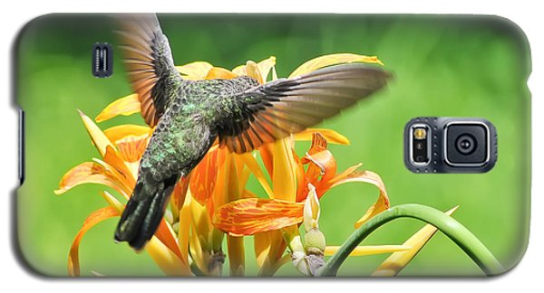 Hummingbird At Lunchtime Galaxy S5 Case by David Perry Lawrence