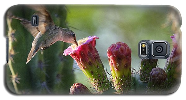 Hummingbird Breakfast Southwest Style  Galaxy S5 Case