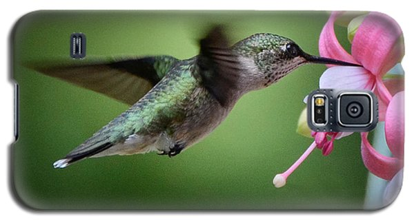Hummingbird Carbs Galaxy S5 Case