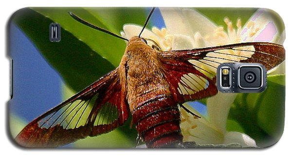 Galaxy S5 Case featuring the photograph Hummingbird Clearwing Moth by Myrna Bradshaw