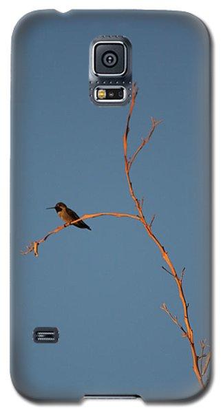 Hummingbird Galaxy S5 Case by David S Reynolds