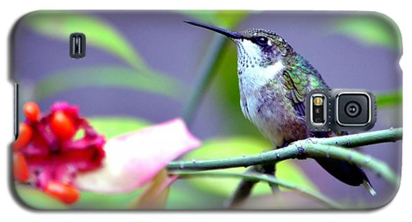Galaxy S5 Case featuring the photograph Hummingbird by Deena Stoddard