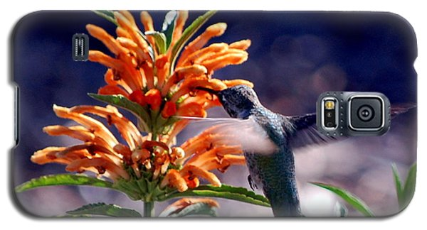 Hummingbird Delight Galaxy S5 Case by AJ  Schibig