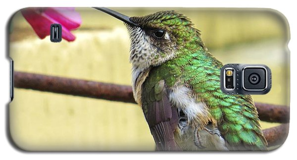 Galaxy S5 Case featuring the photograph Hummingbird Details 4 by Judy Via-Wolff