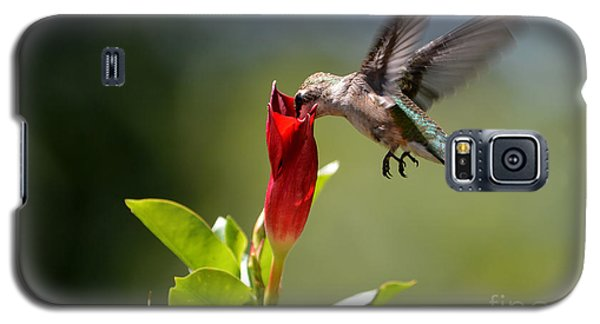 Hummingbird Dipping Galaxy S5 Case by Debbie Green