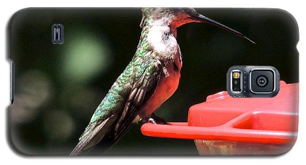 Hummingbird Feeding Galaxy S5 Case