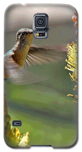 Hummingbird Feeding Galaxy S5 Case