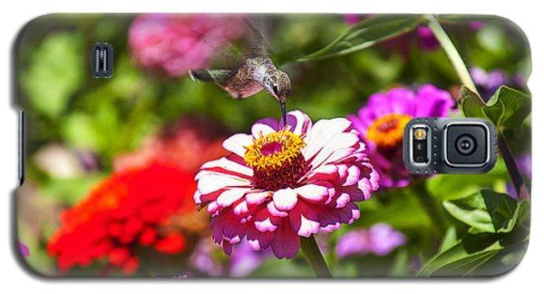 Hummingbird Flight Galaxy S5 Case by Garry Gay