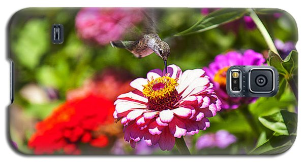 Garden Galaxy S5 Case - Hummingbird Flight by Garry Gay