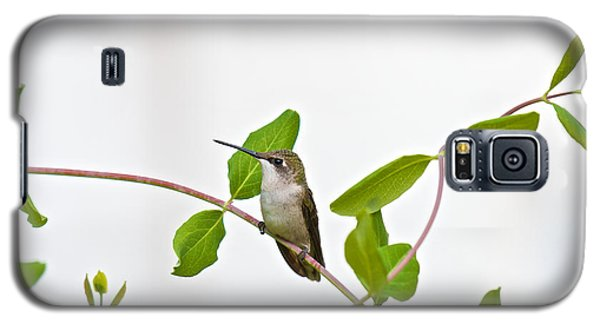Hummingbird Hanging Out On The Honeysuckle Galaxy S5 Case
