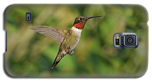 Hummingbird In Flight Galaxy S5 Case
