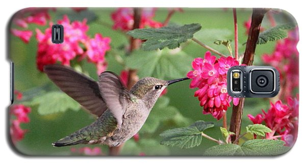 Hummingbird In The Flowering Currant Galaxy S5 Case by Angie Vogel