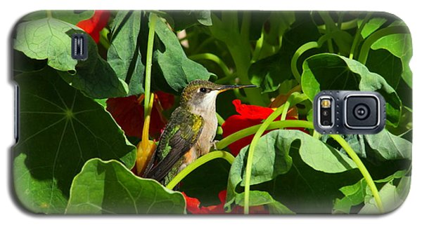 Galaxy S5 Case featuring the photograph Hummingbird In The Nasturtiums by Marjorie Imbeau