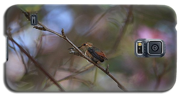 Galaxy S5 Case featuring the photograph Hummingbird by Kevin Ashley