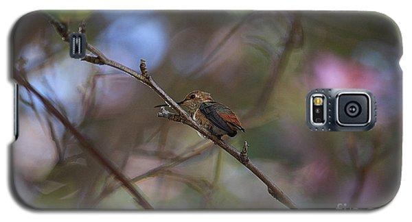 Hummingbird Galaxy S5 Case by Kevin Ashley