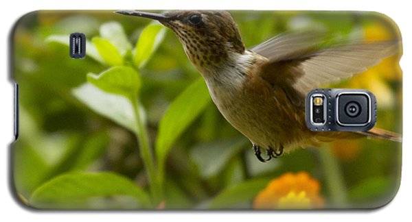 Hummingbird Looking For Food Galaxy S5 Case by Heiko Koehrer-Wagner