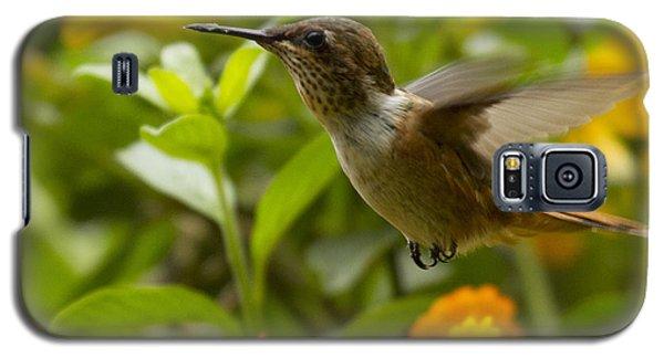 Hummingbird Looking For Food Galaxy S5 Case