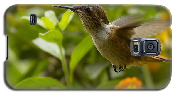 Hummingbird Looking For Food Galaxy S5 Case