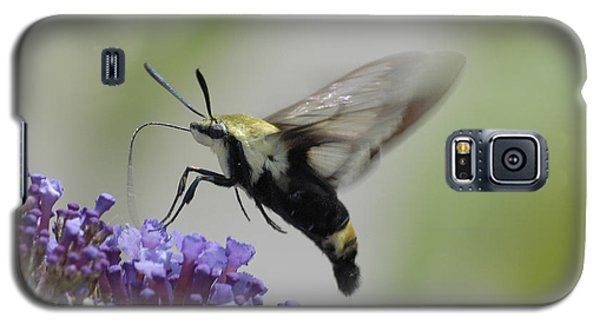 Hummingbird Moth Galaxy S5 Case