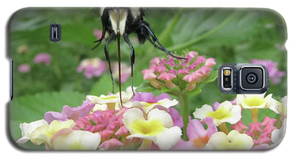 Galaxy S5 Case featuring the photograph Hummingbird Moth by Donna Brown