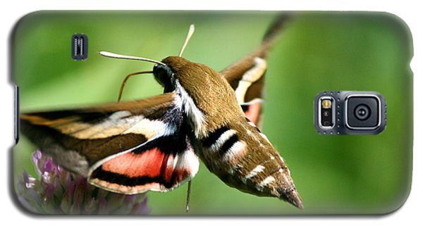 Hummingbird Moth From Behind Galaxy S5 Case