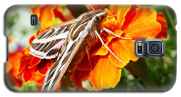 Hummingbird Moth On A Marigold Flower Galaxy S5 Case