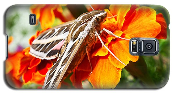 Hummingbird Moth On A Marigold Flower Galaxy S5 Case