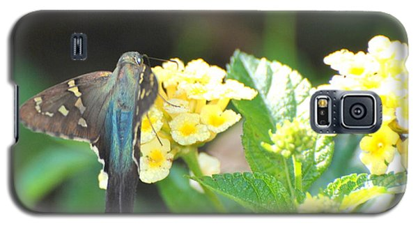 Galaxy S5 Case featuring the photograph Hummingbird Moth On Yellow Flowers by Jodi Terracina