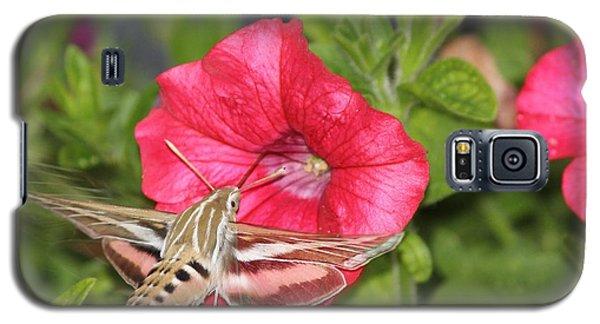 Hummingbird Moth Galaxy S5 Case by Tiffany Erdman