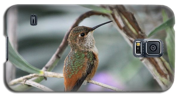 Hummingbird On A Branch Galaxy S5 Case