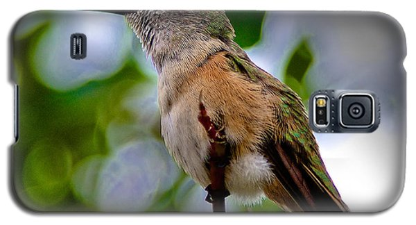 Galaxy S5 Case featuring the photograph Hummingbird On A Branch by Stephen  Johnson