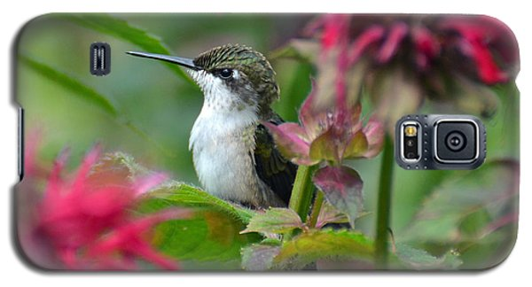 Galaxy S5 Case featuring the photograph Hummingbird On A Leaf by Rodney Campbell