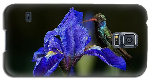 Hummingbird On A Mexican Blue Exotic Flower Galaxy S5 Case