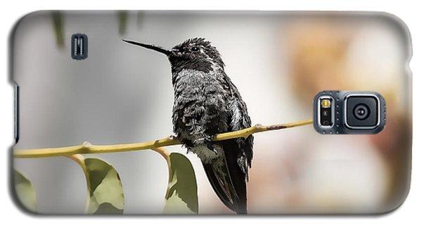 Hummingbird On Branch Galaxy S5 Case