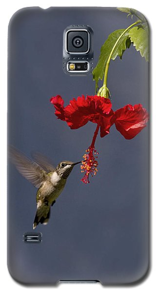 Hummingbird On Hibiscus Galaxy S5 Case by Robert Camp