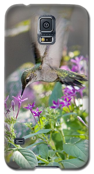 Hummingbird On Penta Galaxy S5 Case by Robert Camp