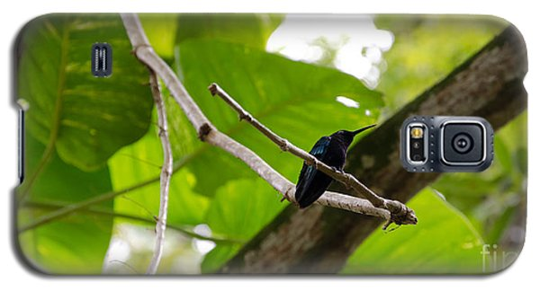 Hummingbird Out On A Limb Galaxy S5 Case