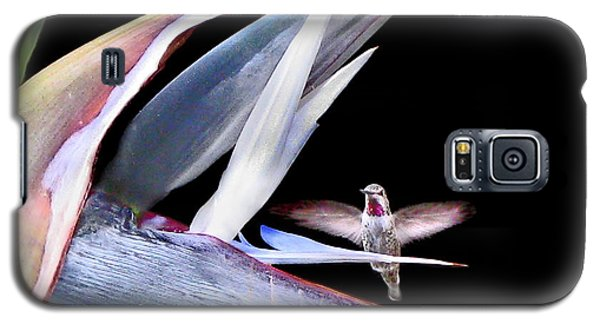 Galaxy S5 Case featuring the photograph Hummingbird Paradise by Jennie Breeze