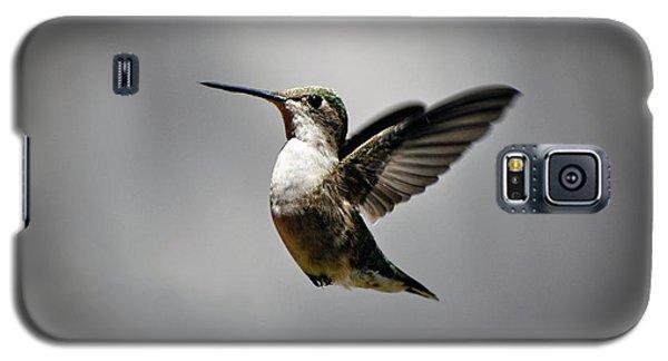 Hummingbird Galaxy S5 Case by Savannah Gibbs