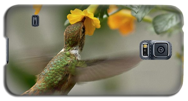 Hummingbird Sips Nectar Galaxy S5 Case