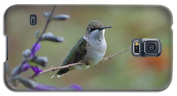 Hummingbird Galaxy S5 Case by Tim Good